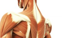 When muscle fibers become knotted, they can cause pain, discomfort and further injury.