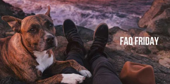 FAQ Friday: Traveling with Pets