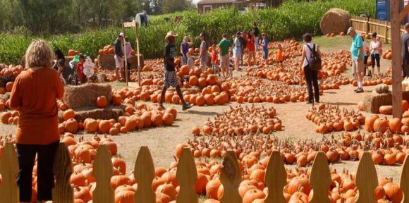 Best Pumpkin Patches to Visit this Fall