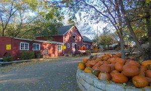 pumpkin patches 2