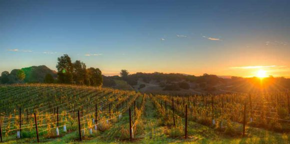 California Wine Escapes